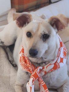 Mixed breeed dog